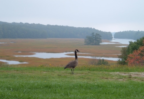 Fall Goose